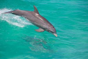 Sailing Vacation - Bahamas